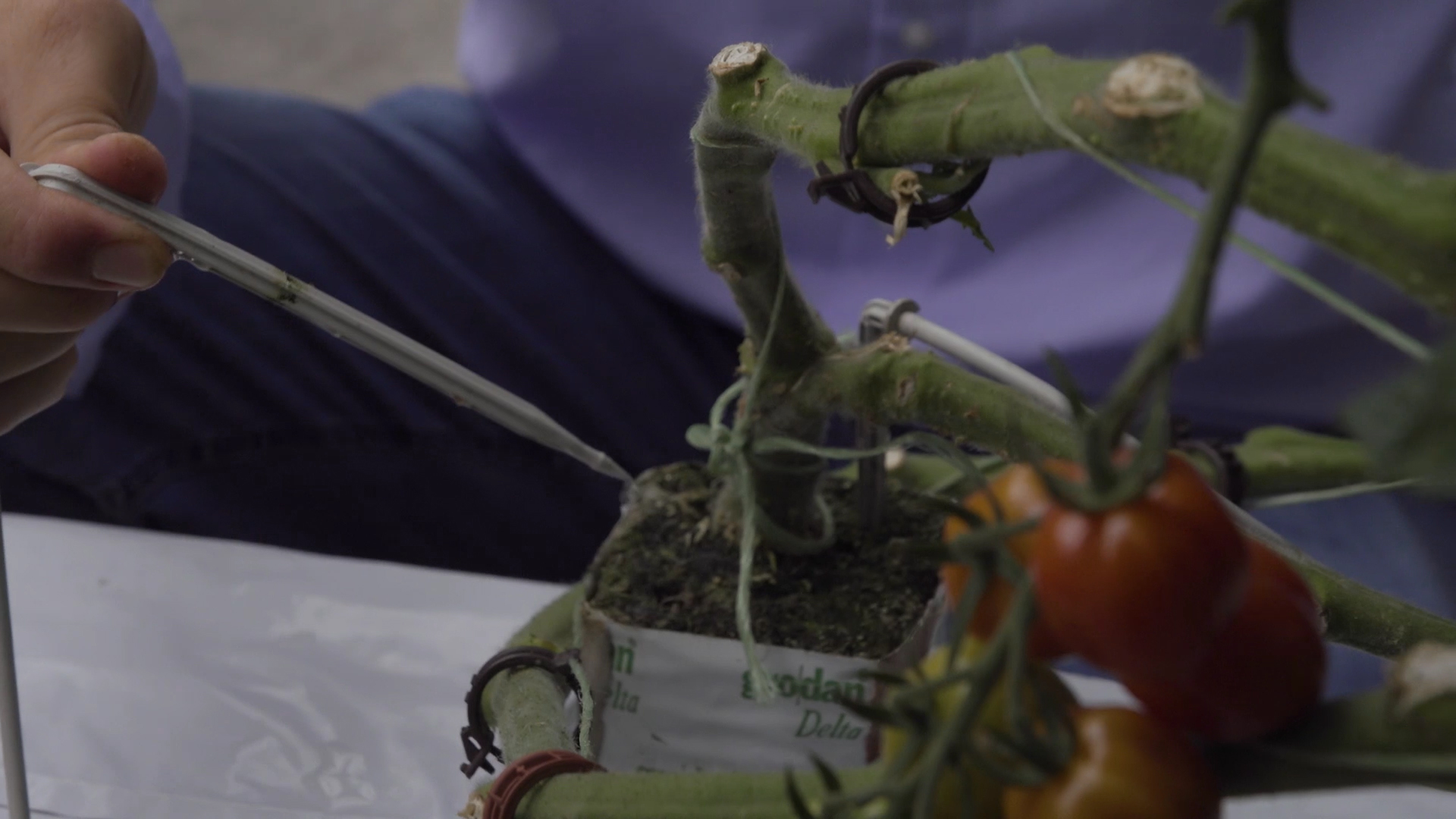 Gartenbauliche Phytotechnologie